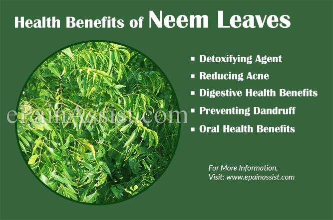 Health Benefits of Azadirachta indica Leaves or Neem Leaves