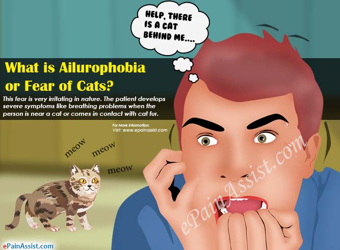 What is Ailurophobia or Fear of Cats|Causes|Symptoms ...