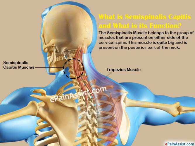 What is Semispinalis Capitis and What is its Function?