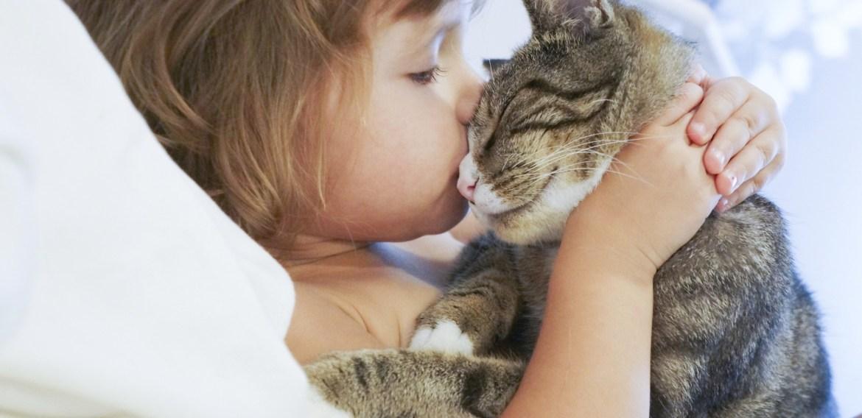 Convivência com gatos diminui risco de crianças terem asma, diz estudo