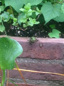 A Frog at Caramoor (Photo by Stephan Moore)