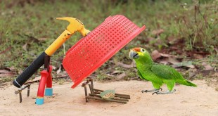 Best Bird Trap Technology | How to Make Bird Trap from Hammer Plier and Plastic Basket