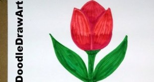 Drawing: How To Draw Cartoon Tulip Flower - Easy Drawing Lesson