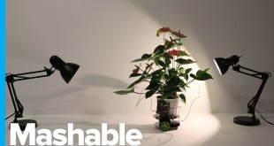 Cyborg Houseplant Drives Itself Toward Light