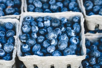 Blueberries are full of vitamins and antioxidants
