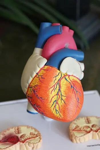melatonin can reduce blood pressure and lower cholesterol