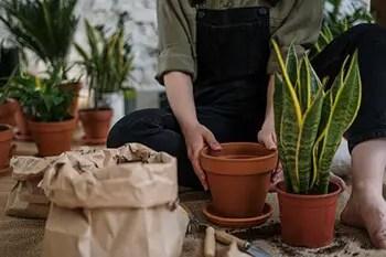 fertilize the soil and deter pests