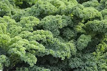 kale is rich in vitamin A, K, C