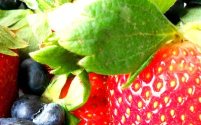 Fresh Berry Roulade
