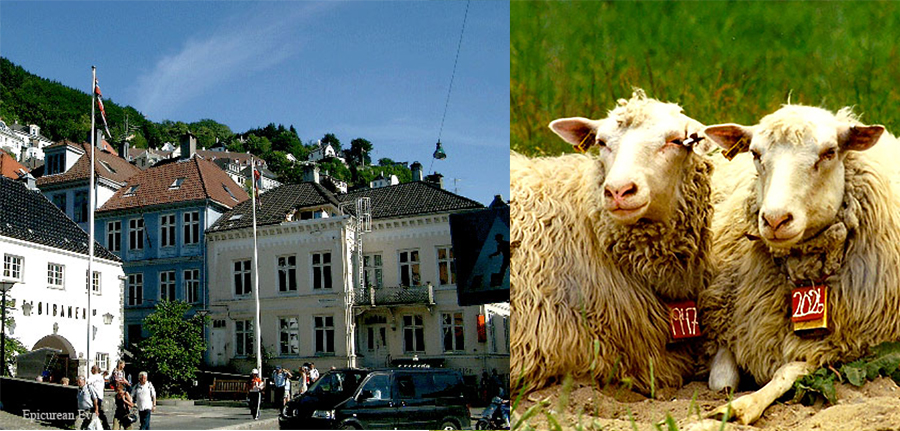 Norway sheep and town