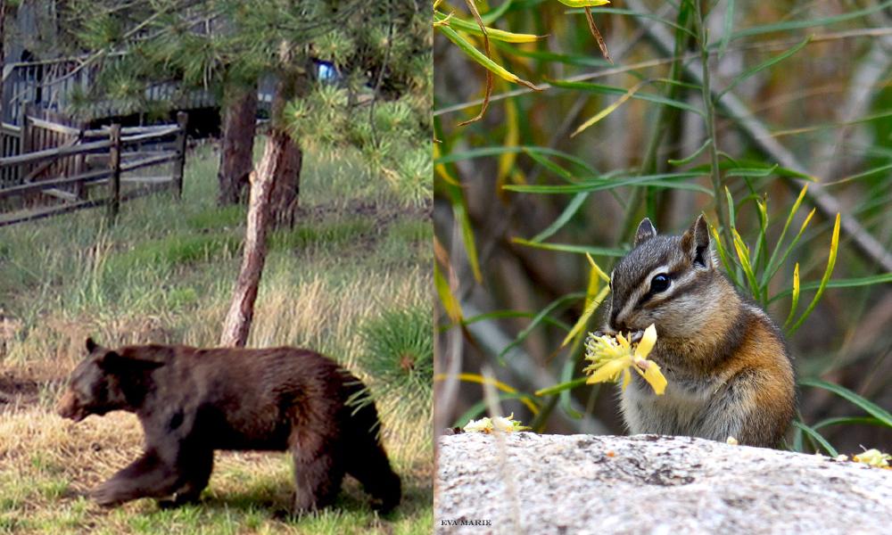 bear-and-chipmunk-web