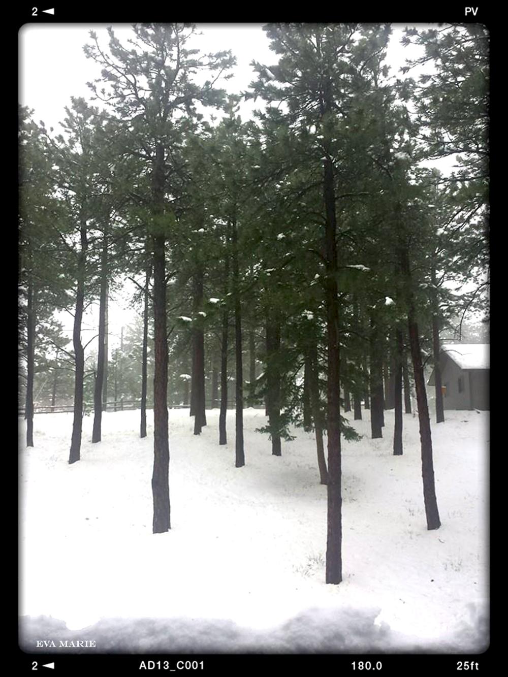snowy-home-wb