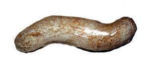 Salviata