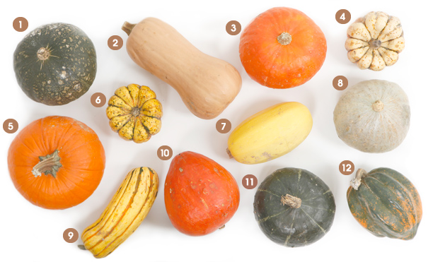 Visual Guide to Winter Squash Main Image