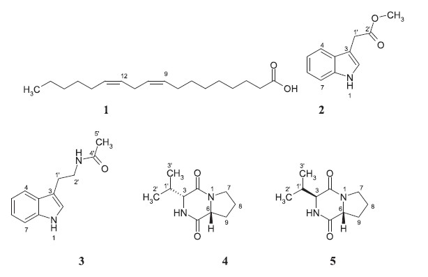Secondary metabolites and bioactivity of two fungal