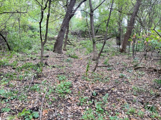 Buckthorn is a problem in the Edenvale Conservation Area.