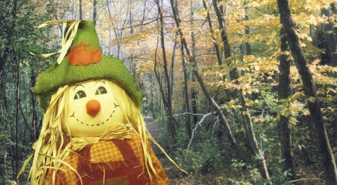 A scarecrow greets visitors to a trail in Birch Island Woods.