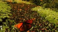 Vídeo mostra exuberante beleza da natureza