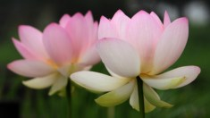 Histórias da Antiga China: A honestidade de um comerciante gera bênçãos eternas