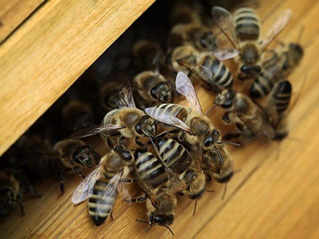 Viele Bienenvölker haben den Winter nicht überlebt. Foto: Fredrik von Erichsen/dpa