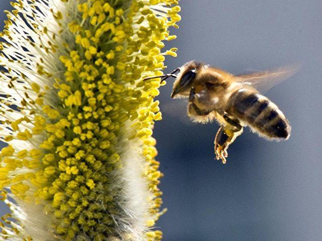 Auch Bienen sind in Gefahr. Foto: Boris Roessler/Archiv/Illustration/dpa