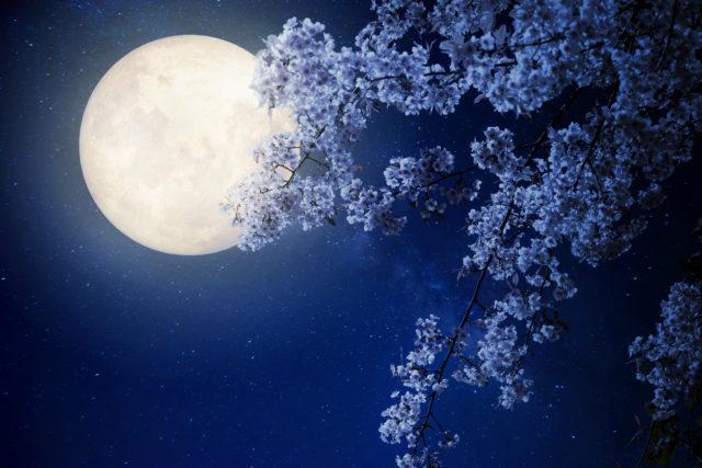Kirschblte bei der Nacht  Von Barthold Heinrich Brockes