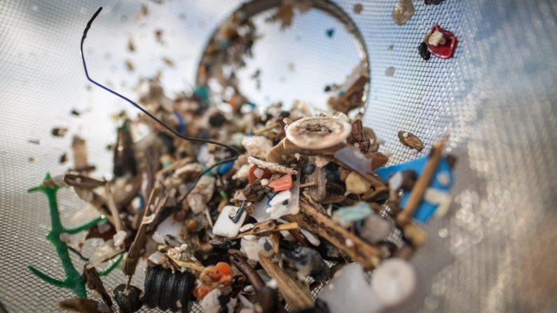 Des microplastiques trouvés pour la première fois dans la nourriture humaine