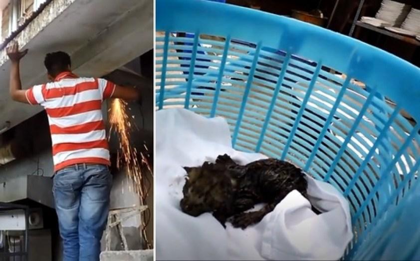 Des chatons nouveau-nés orphelins sont sauvés alors qu'ils étaient piégés dans un conduit d'évacuation durant des jours