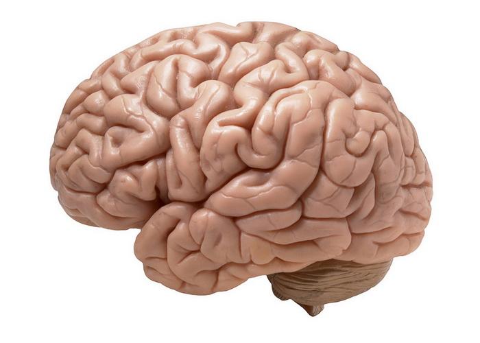 Учёные выяснили: объём мозга человека при диабете уменьшается
