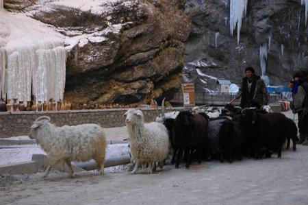 Стадо овец - местный колорит. Фото: Фарафонова Елена/Великая Эпоха