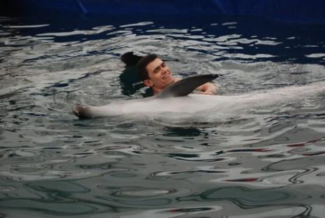 Дельфины Степа и Катя. Фото: Юлия Блохина/Великая Эпоха