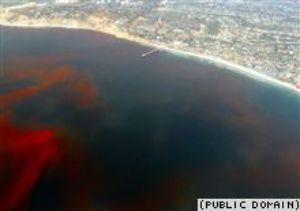 Откуда приходит «красный прилив». Фото с сайта svobodanews.ru