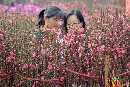 По традиции — не обойтись без веточек персиковых деревьев. Фото: Mike Clarke/AFP