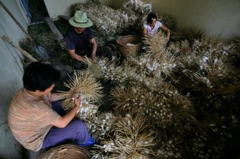 Шёлковая ферма в Чжэцзяне, Китай. Технология со времён древнего востока здесь не слишком поменялась Photo by China Photos/Getty Images