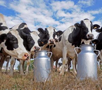 Пейте люди молоко - будете здоровы! Фото: JEAN-PIERRE MULLER/AFP/Getty Images