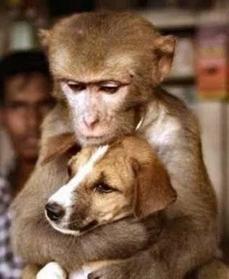 Животные проявляют настоящие чувства любви и заботы. Фото с ntdtv.com