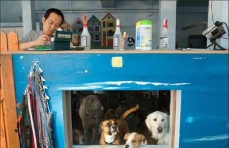 Собаки в ожидании своих хозяев выглядывают в окно в Фог Сити Догс – высококлассном центре по уходу и заботе о собаках на Ломбард Стрит. (Catherine Karnow)