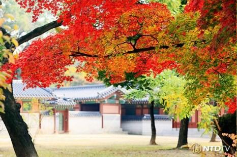 Дворец Чхандок в Сеуле.  Фото: CHENGKUANKAI/NTDTV