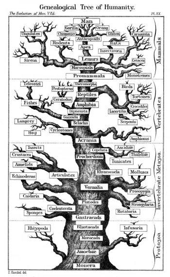 Слабые связи: иллюстрации эволюционных деревьев соединяют различные разновидности, но нет фактического свидетельства, чтобы подтвердить это. Фото: Photos.com