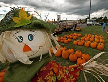 Традиционное празднование Хэллоуина оказалось в США под угрозой из-за недостатка тыкв. Фото: PAUL J. RICHARDS/AFP/Getty Images