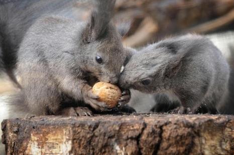 Белки – любители спорта и другие интересные зверьки.Фото: Getty Images