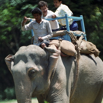 Катание на слоне в национальном парке Непала. Фото РИА Новости