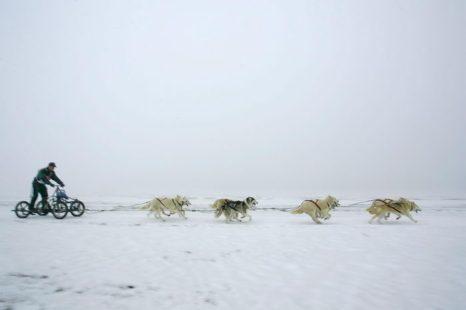Международные гонки на собачьих упряжках пройдут в Карелии. Фото: Carsten Koall/Getty Images