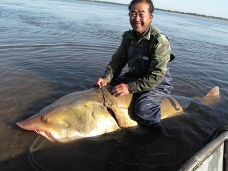 Китайские рыбаки поймали осетра весом более 250 кг. Фото с epochtimes.com