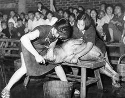 Вдохновлённые идеями Мао Цзэдуна, китайские девушки демонстрируют навыки забивания свиней. Фото с kanzhongguo.com