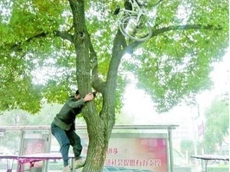 Парковка велосипеда на дереве. Провинция Чжецзян. Ноябрь 2010 год. Фото с epochtimes.com