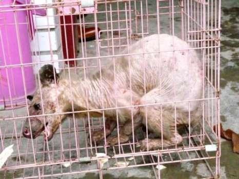 Китайские крестьяне поймали неизвестное животное. Фото с epochtimes.com