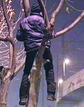 Парню, который не смог найти работу и оплачивать проживание, ничего не оставалось, как поселиться на дереве. Фото с epochtimes.com