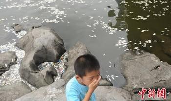 Массовый мор рыбы в реке Хайхэ. Июль 2010 год. Фото с news.yninfo.com