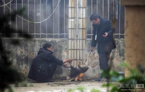 Двое охранников поймали собаку и жарят её на костре. Город Куньмин провинции Юньнань. 14 ноября 2011 год. Фото с news.ifeng.com